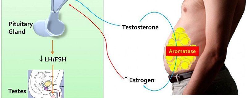 Estrogen Blockers