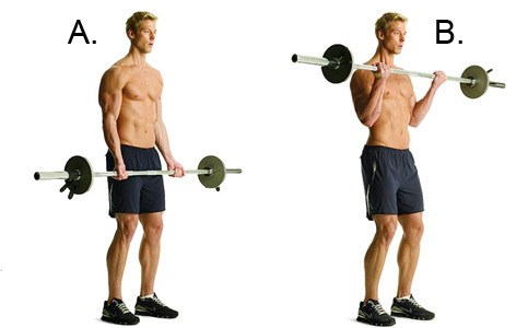 Barbell Curls for Bicep Workout
