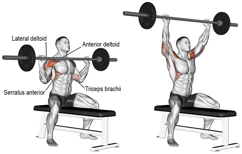 Way for Getting a Massive Shoulder